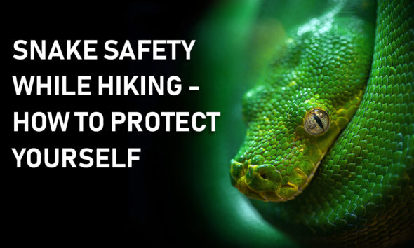 Snake Safety Tips